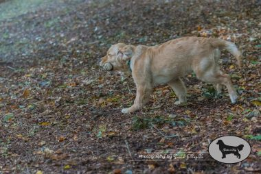 goldens-day-110
