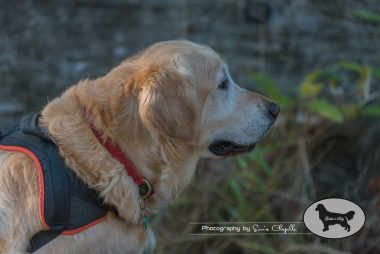 goldens-day-169