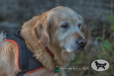 goldens-day-170