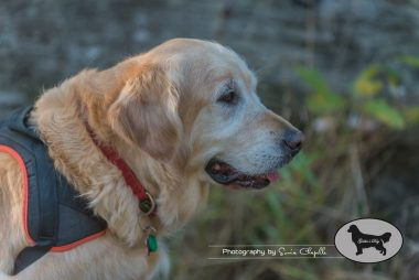 goldens-day-171