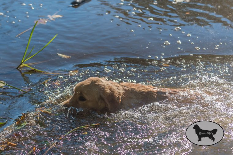 goldens-day-172