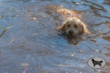 goldens-day-175