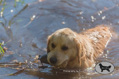 goldens-day-178