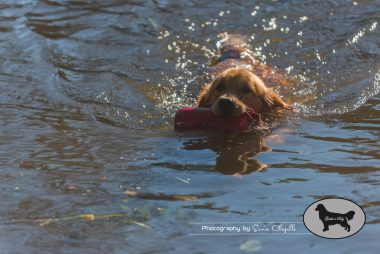 goldens-day-208