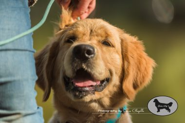 goldens-day-8