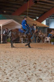 salon-du-cheval--hannut-1007_26160232922_o
