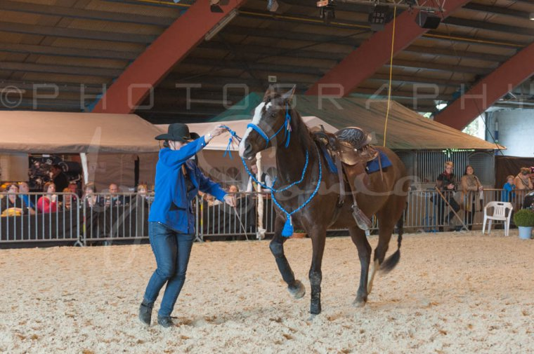 salon-du-cheval--hannut-1025_25647888324_o