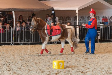 salon-du-cheval--hannut-1044_26252661465_o