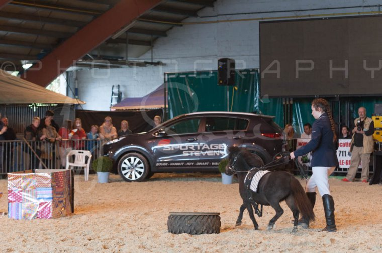 salon-du-cheval--hannut-1082_25979801430_o
