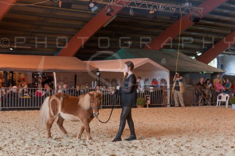 salon-du-cheval--hannut-1141_26226720926_o