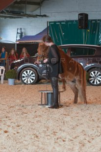 salon-du-cheval--hannut-1144_26160209862_o