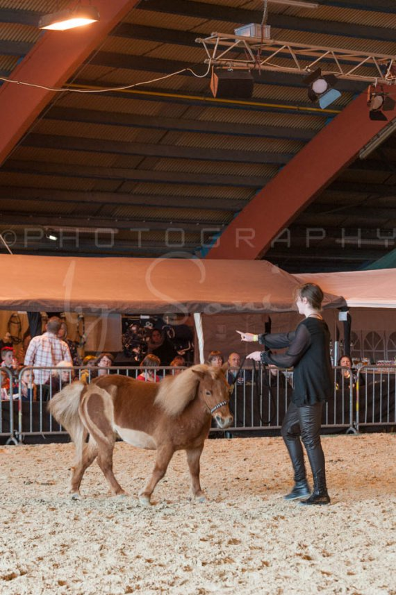 salon-du-cheval--hannut-1149_25647868094_o