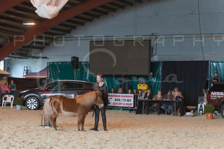 salon-du-cheval--hannut-1150_26226719346_o