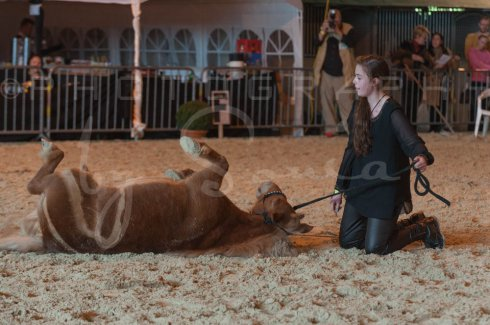 salon-du-cheval--hannut-1158_25647865784_o