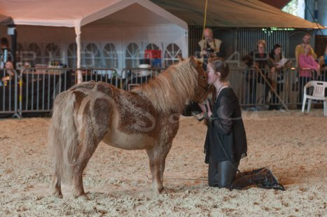salon-du-cheval--hannut-1165_25979788120_o