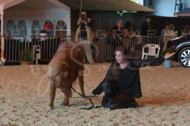 salon-du-cheval--hannut-1174_26226714776_o