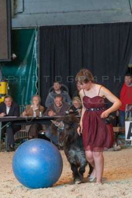 salon-du-cheval--hannut-1184_25979784290_o