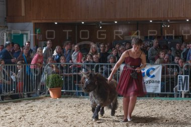 salon-du-cheval--hannut-1195_26252561745_o