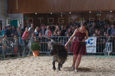 salon-du-cheval--hannut-1196_26252633725_o