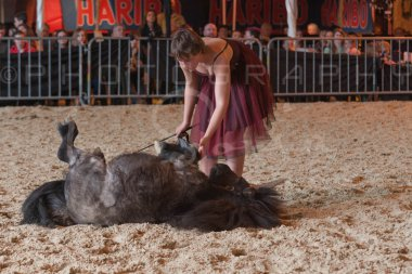 salon-du-cheval--hannut-1203_26226706676_o