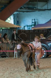 salon-du-cheval--hannut-1228_26252627055_o