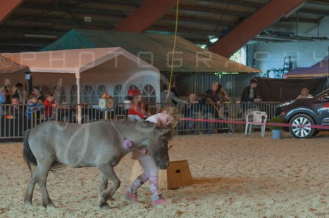 salon-du-cheval--hannut-1234_25649950693_o