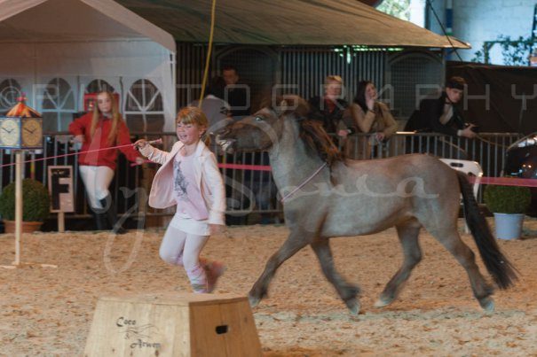salon-du-cheval--hannut-1238_26160190462_o