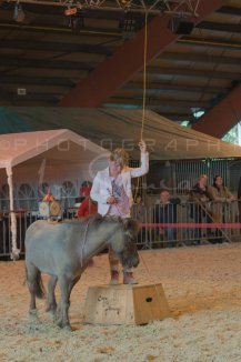 salon-du-cheval--hannut-1242_26226699546_o