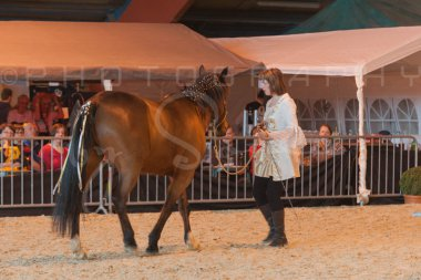 salon-du-cheval--hannut-1248_26226698076_o