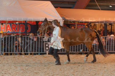 salon-du-cheval--hannut-1250_25649947593_o