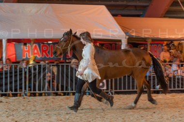 salon-du-cheval--hannut-1251_26226697696_o