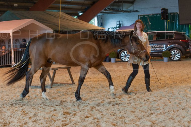 salon-du-cheval--hannut-1259_25649946073_o