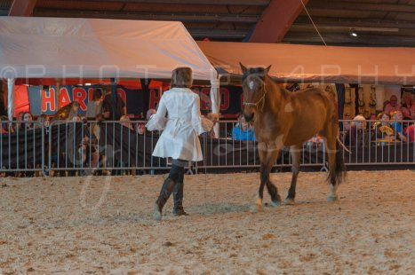 salon-du-cheval--hannut-1260_26226696206_o