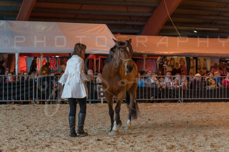 salon-du-cheval--hannut-1263_26160186102_o
