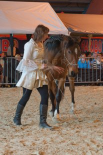 salon-du-cheval--hannut-1264_26160185742_o