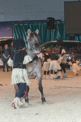 salon-du-cheval--hannut-1290_26186344311_o