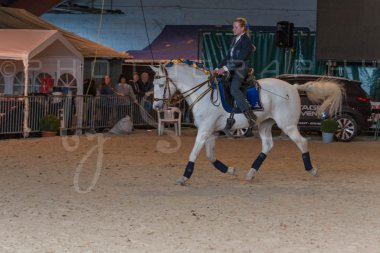 salon-du-cheval--hannut-1349_26226686396_o
