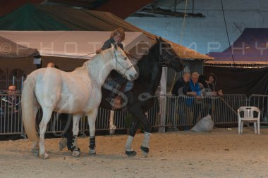 salon-du-cheval--hannut-1367_25647832694_o