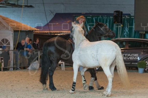 salon-du-cheval--hannut-1368_26252558555_o