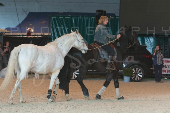 salon-du-cheval--hannut-1369_26252607665_o