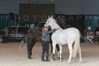 salon-du-cheval--hannut-1373_26226634126_o