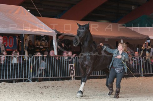 salon-du-cheval--hannut-1379_25979754480_o