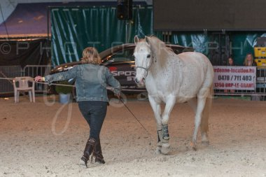 salon-du-cheval--hannut-1387_25979753230_o