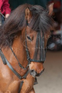 salon-du-cheval--hannut-1392_26160168652_o