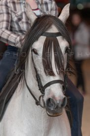 salon-du-cheval--hannut-1396_26186329141_o