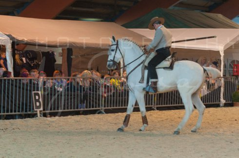 salon-du-cheval--hannut-1427_26186325351_o