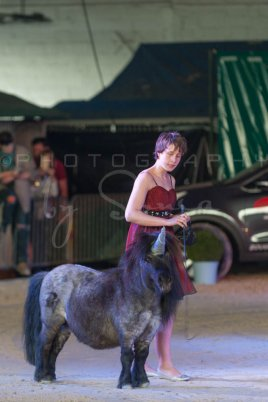 salon-du-cheval--hannut-1476_26160159852_o