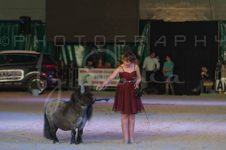 salon-du-cheval--hannut-1478_25979705060_o