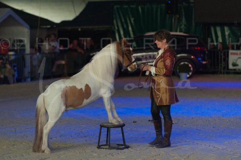 salon-du-cheval--hannut-1491_26226666816_o
