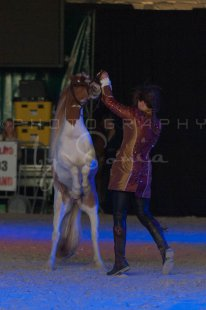 salon-du-cheval--hannut-1494_26186283611_o